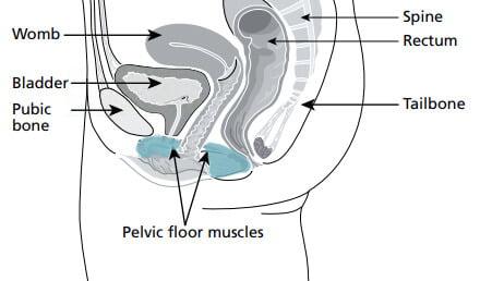 tummy tuck post pregnancy abdominoplasty pelvic floor